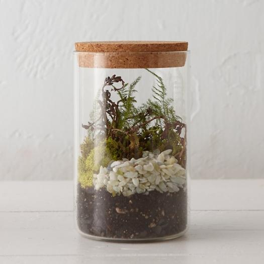 Specimen Jar Terrarium 1
