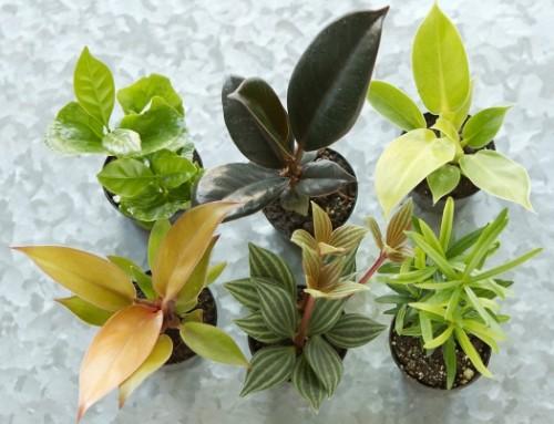 Choosing Suitable Plants for your Terrarium